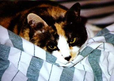The Beautiful Calico Lee